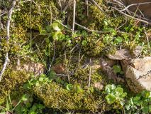 Plants and moss growing between rocks and stones stock photo