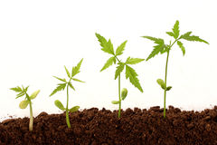 Plants growing Royalty Free Stock Photo