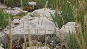 Plants growing on beach. Plants and rocks on beach stock video footage