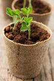 Plants growing Stock Image