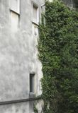 Plants growing on building wall Royalty Free Stock Photography