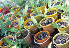 Plants growing in colorful pots royalty free stock photography
