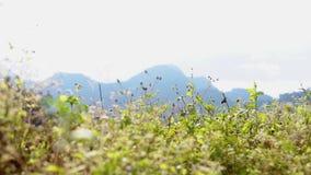Plants growing in the field against a clear sky. Slide scene stock footage