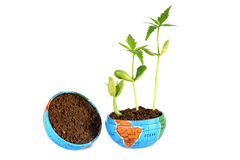 Plants growing in globe Royalty Free Stock Image
