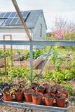 Plants Growing In Greenhouse. Home Vegetable Garden Sustainable Living. Plants growing in greenhouse and vegetable garden with raised beds. Solar Panel House Royalty Free Stock Photography