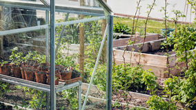Plants Growing In Greenhouse. Vegetable Garden Sustainable Living Royalty Free Stock Photography