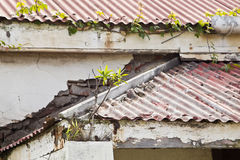 Plants growing on a house roof Stock Images