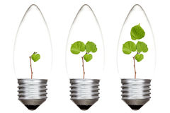 Plants growing inside the light bulbs. Light bulbs with green plants inside. Isolated on white background Royalty Free Stock Photos