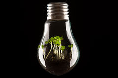 Plants growing in light bulb, concept of ecology Royalty Free Stock Photography
