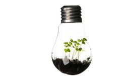 Plants growing in light bulb isolated on white Stock Image