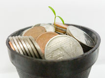 Plants growing on money in black pot. Close up Plants Stock Images