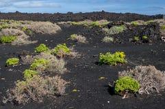 La Palma volcano landscape, Canary Islands, Spain Royalty Free Stock Photo