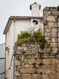 Plants growing on an old stone wall in Cres royalty free stock photo