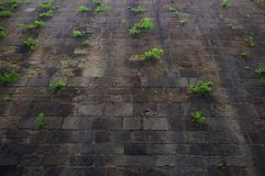 Plants growing on an old wall Royalty Free Stock Photos