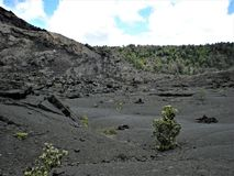 Plants Growing Out of the Lava Bed Stock Image