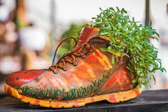 Plants growing in painted shoe Royalty Free Stock Images