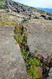 Plants growing in rock fissure Stock Photography