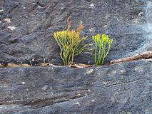 Plants Growing on Sandstone Cliff Stock Photos
