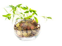 Plants growing In savings coins Stock Photos