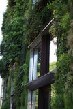 Plants growing on the side of a Building. Paris, France Royalty Free Stock Photography