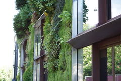 Plants growing on the side of a building. Paris, France Stock Photography