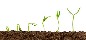 Plants growing from soil-Plant progress isolated Royalty Free Stock Image