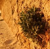 Plants growing in a wall royalty free stock photo