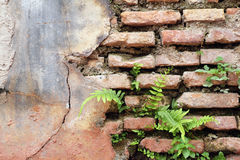 Plants growing from weathered brick structure wall Stock Photo