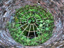 Plants growing in a well, HDR Royalty Free Stock Photo