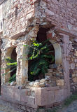 Plants grown inside the old church ruins Royalty Free Stock Photography