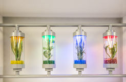 Plants grown in test tubes Stock Photography