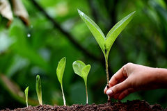 Plants growth-New life. Plants growing from soil Royalty Free Stock Photo