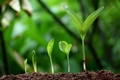 Plants growth-New life. Plants growing from soil-New life Royalty Free Stock Image