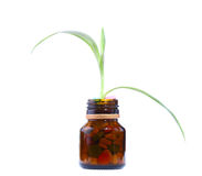 Plants growth from pill bottles Royalty Free Stock Photo