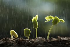 Plants growth from seed with raining. Royalty Free Stock Photo