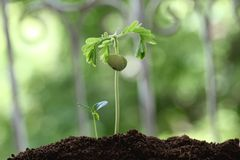 Plants growth Royalty Free Stock Photography