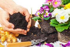 Plants, hands with potting soil Stock Photos