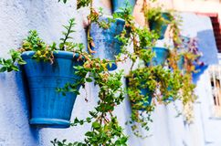Plants hanging on wall stock photography