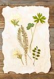 Plants herbarium stock photo
