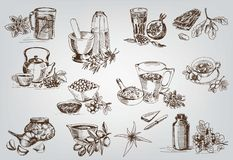 Plants and herbs in folk medicine royalty free illustration