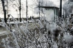 Plants with hoarfrost in foreground and tram station background in Budapest stock photos
