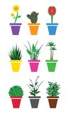Plants for home Royalty Free Stock Image