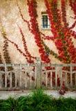 Plants on house wall Stock Photos