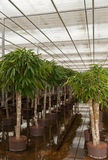 Plants in a hydroculture plant nursery Stock Images