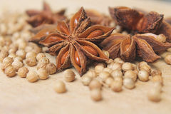 Star anise and coriander - Spices  Stock Images