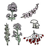 Plants illustration Stock Image