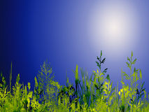 Plants illustration. Illustration of mixed planst with bright sky background Stock Photos