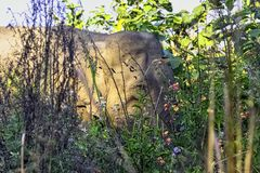 Plants in Indian jungle with wild elephant in background - Jim Corbett National Park, India. Plants in Indian jungle with wild elephant /Elephas maximus indicus stock photography
