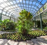 A footpath through one of the halls with flowers and plants in David Welch Winter gardens, Duthie park, Aberdeen stock photos