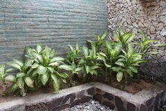 Plants in the interior of the bathroom Stock Photo